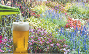 Is it true that I can use beer as a fertilizer for my plants? Karen