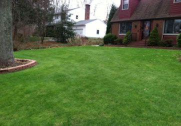 Organic Lawn Care Services for Ledyard Connecticut.