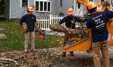 Tree Care, Tree Removal, Tree Pruning, Tree Limbing Services for East Lyme, Niantic, Old Lyme, and Old Saybrook.